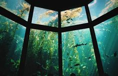 I tried not to, but I couldn't help but be distracted by the gigantic walls of glass, displaying various fish, sharks, and turtles. Every time I tried to focus on people, I'd see something colorful out of the corner of my eye, and then was staring at a bright orange or yellow fish.--Fake
