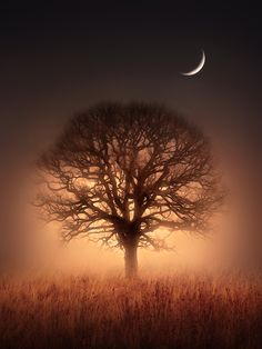 """Tree of Light "" by Jenny Woodward, via 500px."