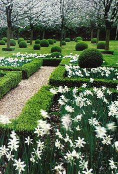 Boxwoods and spring bulbs.