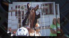 Racing at the local county fair. Wayne County, Harness Racing, County Fair, Horse Racing, Ohio, Horses, Watch, Animals, Image