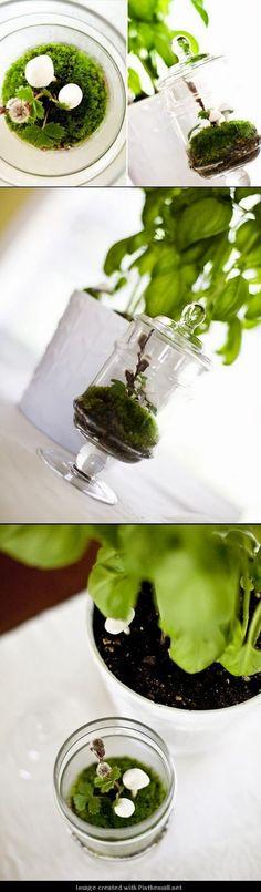 DIY terrarium with handmade mushrooms