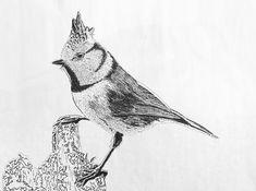 Kuifmees 2017 Fine Art, Bird, Illustration, Animals, Animaux, Birds, Illustrations, Animal, Animales