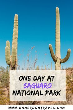 One day in Saguaro National Park is the perfect addition to an Arizona trip and long weekend getaway. It is a great park for hiking and taking in gorgeous view. Valley View Overlook, Signal Hill, Desert Discovery, Micah View Loop and the Cactus Forest Trail are some of the best hikes in Saguaro National Park. #saguarohikes #weekendtrip #arizonaweekend #tucson #arizonahikes #usnationalparks #saguaro Arizona National Parks, Arizona Trip, Arizona Travel, Weekend Trips, Long Weekend, Weekend Getaways, Usa Travel, Travel Tips, Signal Hill