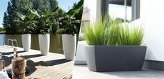 Image result for cool outdoor plant pots dubai Outdoor Plants, Potted Plants, Plant Pots, Palm Beach Gardens, Small Gardens, Dubai Garden, Garden Soil, View Image, Container Gardening