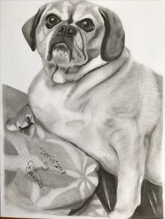 "graphite drawing on Bristol board of a friends dog ""Doris"" #dogdrawings #graphitedrawing #Art"