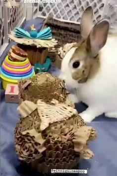 Rabbit Toys Cute Bunnies play with cardboard teddy bear! Rabbit Enrichment / Best Bunny Life / House Rabbits / Best Rabbit Toys Funny Animal Memes, Funny Animal Videos, Funny Animals, Funny Pets, Farm Animals, Pet Bunny Rabbits, Bunnies, Rabbit Toys, Pet Rabbit