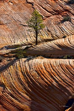 Tree in Flowing Rock by Christopher Holmes