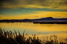 "A beautiful day at the Tulelake Wildlife Refuge! The waterfowls are ready to start their day. This photograph is titled ""Dawn's Reflection"" by John Rogers."