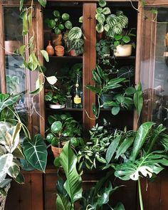 garden in the home