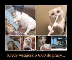Polish Memes, Weekend Humor, Funny Mems, Warrior Cats, Good Mood, True Stories, Wise Words, Funny Animals, Haha