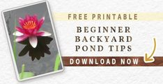 How to Clean Gross Murky Pond Water Fast—without Adding Chemicals Small Backyard Ponds, Ponds For Small Gardens, Small Ponds, Garden Ponds, Garden Bed, Pond Filter Diy, Pond Filters, Patio Pond, Pond Landscaping