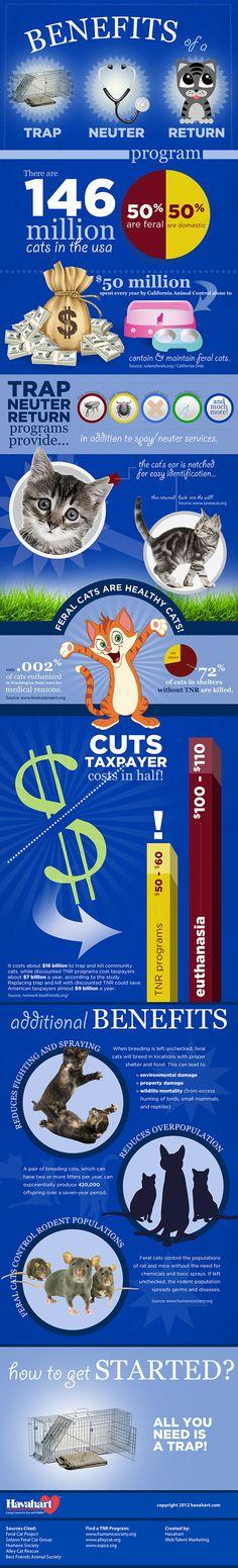 tnr infographic Infographic: The Benefits of Feral Cat TNR Programs vs. Euthanasia