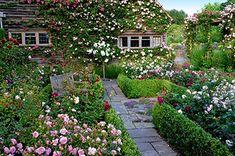 Town Place Rose Garden
