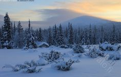 Lommoltunturi - maisema tunturimaisema talvi talvimaisema metsä metsänreuna kuusi kuusimetsä kuusikko kuusi kuusipuu kuusipuut ilta iltatunnelma sininen hetki hämärä pilvi pilvet valaistu pilvimuodostelma tunturi Lommoltunturi lato niittylato kataja katajat lumi luminen arktinen sydäntalvi kaamos Lappi Pallas-Yllästunturin kansallispuisto