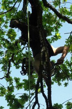 @Josh Gerald Philpotts: Oak pruning with zubat 330 :)