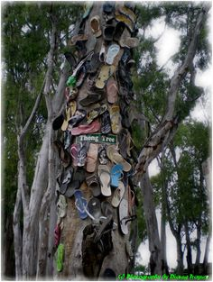 Thong Tree. Only in
