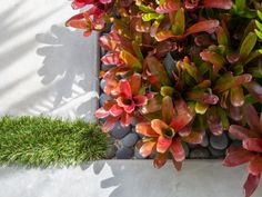 Colorful succulents and grass break up the gaps between pavers on this patio. Backyard Paradise, Green Thumb, Hanging Planters, Craftsman Front Porches, Colorful Succulents, Front Yard, Plant Life, Backyard, Curb Appeal
