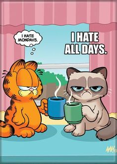 Garfield & Grumpy Cat Monday All Days magnet - Cat Wallpaper Garfield Cartoon, Garfield Quotes, Garfield And Odie, Garfield Comics, Garfield Monday, Grumpy Cat Quotes, Funny Grumpy Cat Memes, Funny Animal Memes, Funny Cats
