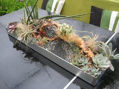 terrarium de plantes grasses mixtes