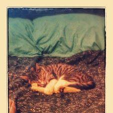 Athena nap time #cat
