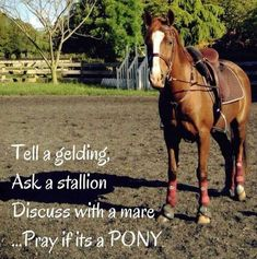 Negotiations Pretty Horses, Horse Love, Beautiful Horses, Horse Girl, Funny Horse Memes, Funny Horses, Horse Humor, Equestrian Memes, Equestrian Problems