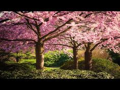 Beautiful Relaxing Music: Japanese Music, Chinese Music, Romantic Music, Meditation Music ★106 - YouTube