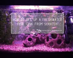 Here you will learn how to set up an aquarium from scratch. The questions you need to ask yourself and the tips you should know are in here. Big Sur State Park, Best Places To Camp, Freshwater Aquarium, Big Fish, Fishing Tips, Betta, Fish Tank, Fresh Water, This Or That Questions