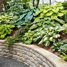 Grow a lush shade garden with our encyclopedic guide (including 100 photos!) to hostas. | Photo: Alison Rosa | thisoldhouse.com