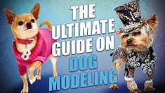 How to Get Started in Dog Modeling and Acting Famous Dogs, Dog Modeling, Dog Paws, New Puppy, Get Started, Your Dog, Dog Lovers, Stage, Parenting