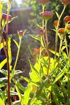 spider's web architecture in flowers