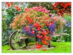 A wheelbarrow gone floral  100 Container Garden Ideas For Arkansas, Texas, Tennessee and The South, Part 2 Jonesboro | Memphis | South Lawn Care Landscape Jonesboro Garden Flowers Container Gardens Best Flowers For Container Gardens BadAsFlowers Arkansas Garden Annuals