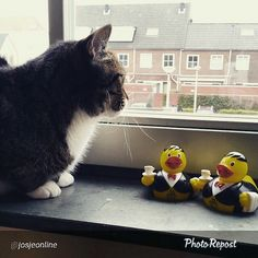 Two #JATravelDucks under the watchful eyes of Tiger. Thanks to @josjeonline for the picture!