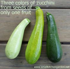 Zucchinis descended from a blond/green cross