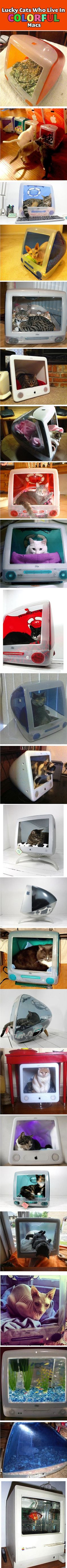 Give that old Mac new purpose.