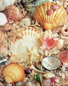 Mermaid treasures ... some not so unusual but diffinetly a mermaids treasure! :)