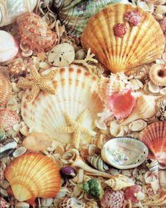 Mermaid treasures ... some not so unusual but diffinetly  a mermaids treasure! :)