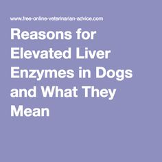 Reasons for Elevated Liver Enzymes in Dogs and What They Mean