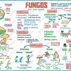 Mapa Mental  Fungos Download do arquivo em alta resoluohellip