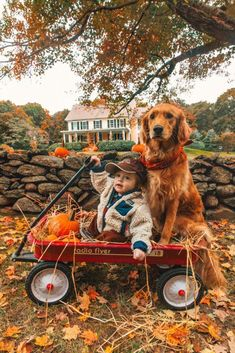 It's fall here with Flying with Air. When we get to play with leaves and ride in a red wagon with a golden retriever Cute Puppies, Cute Dogs, Dogs And Puppies, Cute Babies, Doggies, Animals And Pets, Baby Animals, Cute Animals, Autumn Aesthetic