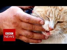 Cat Man Of Aleppo Risks His Life In A Combat Zone To Care For Over 200 Abandoned Cats - Happy Pets Club