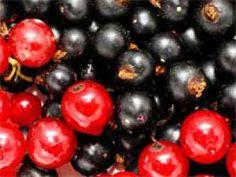 Váš Blueberry, Cherry, Fruit, Food, Meal, The Fruit, Essen, Hoods, Blueberries