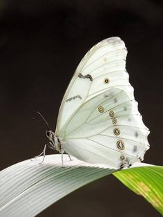 my sweet angel Faith comes to me as a white butterfly I am so ready for spring...