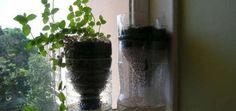 Self-watering-recycled-vase