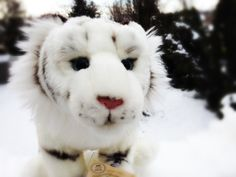 Image from http://fc00.deviantart.net/fs71/i/2013/067/a/5/webkinz_signature_white_tiger_in_the_snow_by_sportstar104-d5xdx6i.png.