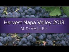 Harvest Napa Valley 2013 Mid-Valley #napavalley #napaharvest #harvest2013