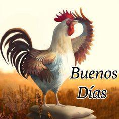 Imagen de un gallo para darte los Buenos Días