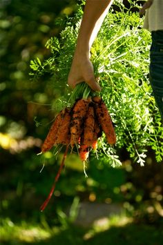 Are You Making These Vegetable Gardening Mistakes