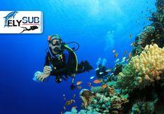 ElySub Dive Club: INIZIA AD IMMERGERTI