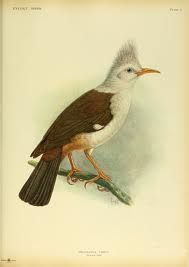 extinct birds with names - Google Search