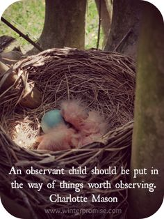 """An observant child should be put in the way of things worth observing."" - Charlotte Mason"